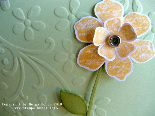 Blüte nah