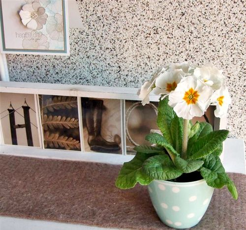 1_Flower_Primula_2013-03-26 (Mittel)