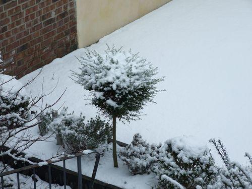 Schnee_Garten_2_2012-12-7