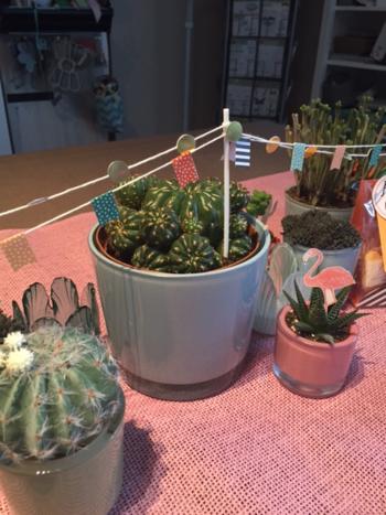 Kaktus_2016-05-15