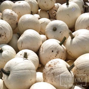 6#white#pumpkin#weiss#kuerbiss#2017-09-18