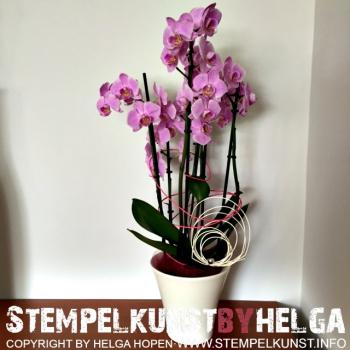 2#flowers#blumen#2016-07-18