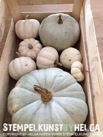 2#deko#herbst#autumn#kuerbis#pumpkin#2016-09-18
