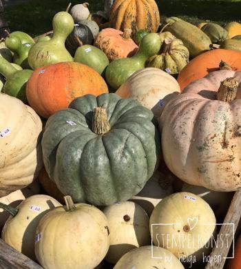 5#mixedcolor#pumpkin#bunt#kuerbiss#2017-09-18