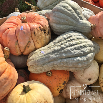 7#mixedcolor#pumpkin#bunt#kuerbiss#2017-09-18