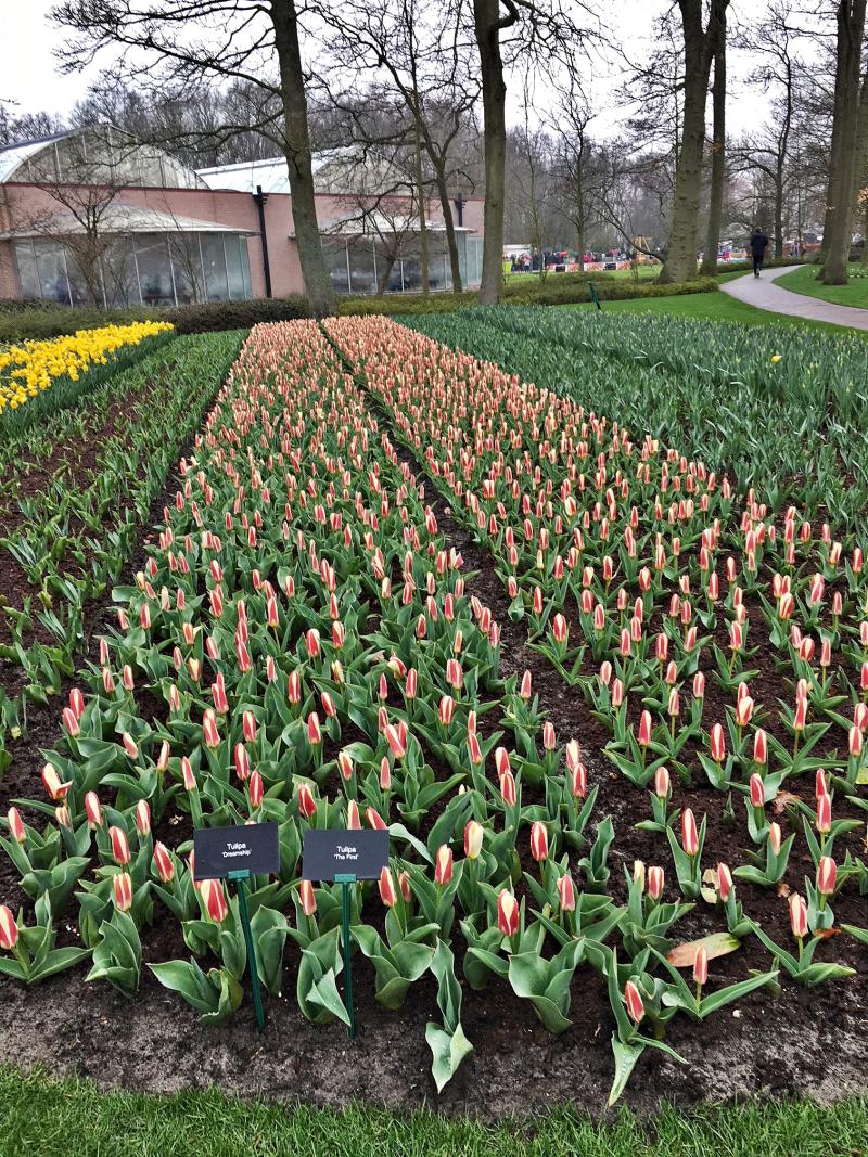 13#flowers#keukenhof#lisse#tulpen#tulips#stempelkunst-by-helga#2018-04-03