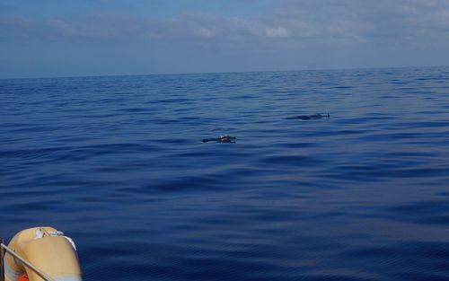 5#dolphin1#madeira2015#2015-06-25