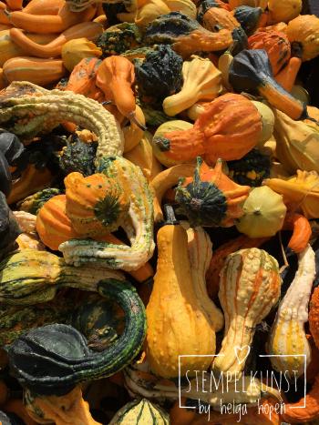 3#mixedcolor#pumpkin#bunt#kuerbiss#2017-09-18