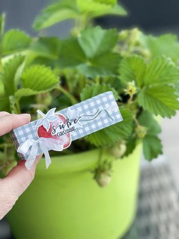 3#erdbeere#beerenstark