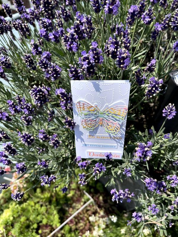 5-karte Schmetterling